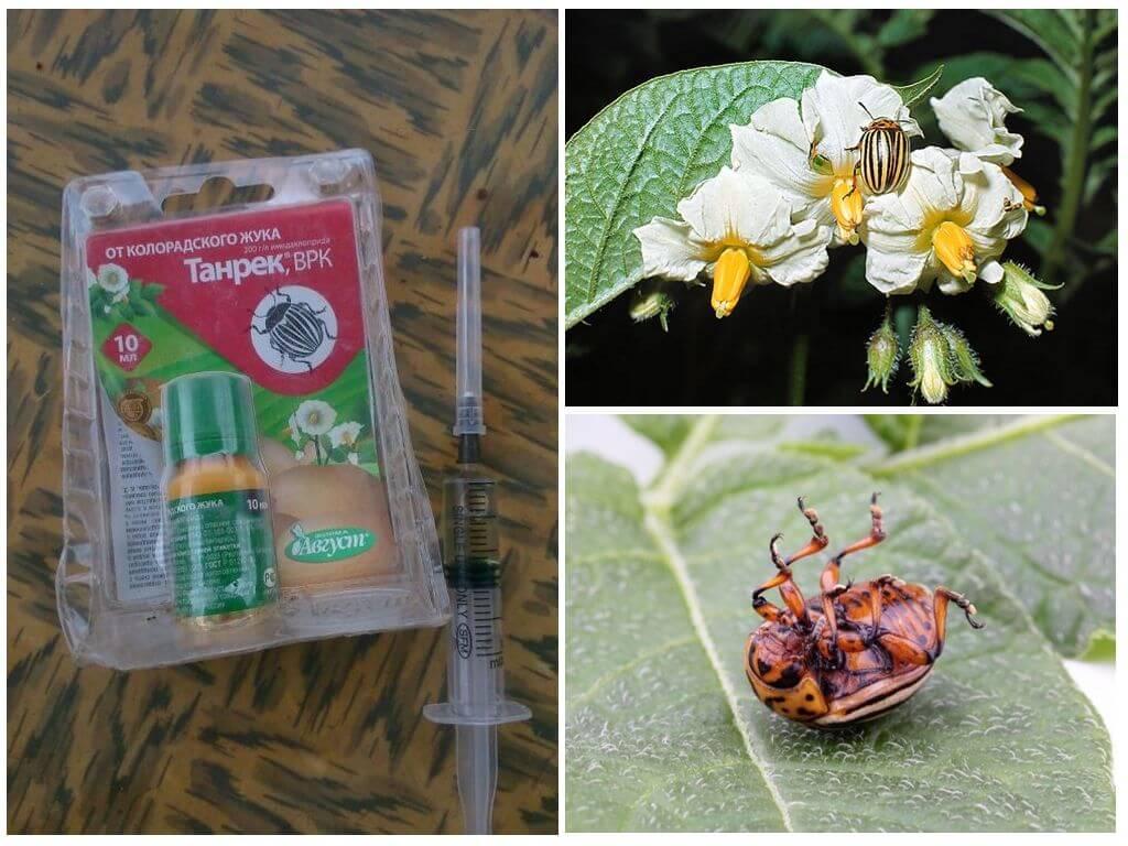 Средство Танрек от колорадского жука