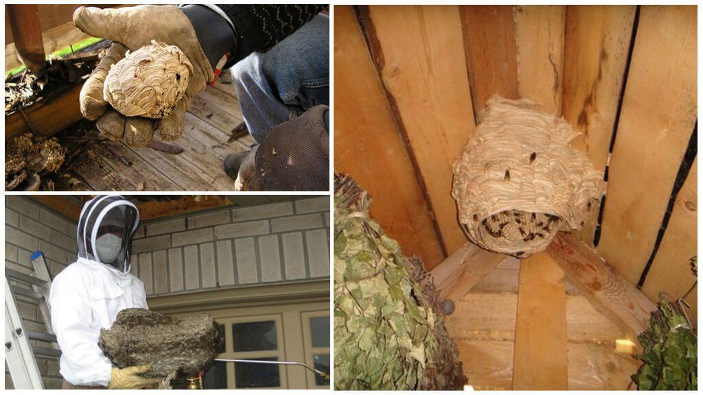 Способы уничтожения гнезд