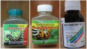 Биологические средства против гусениц