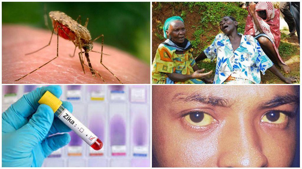 Вирусы Зика, Западного Нила и желтой лихорадки