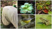 Растения-хищники, птицы и лягушки едящие комаров