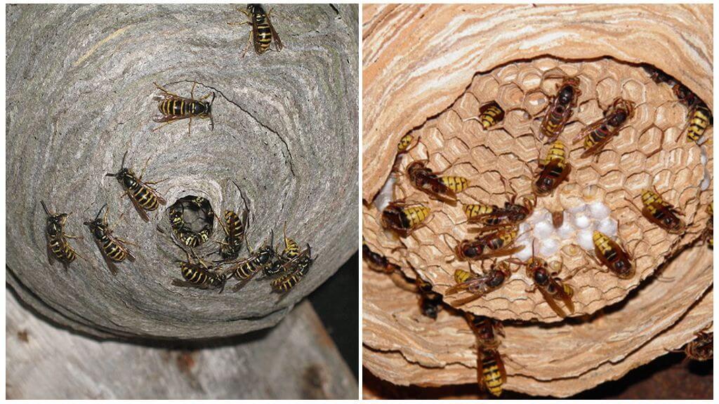 Гнезда насекомых