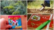 Меры борьбы с гусеницами