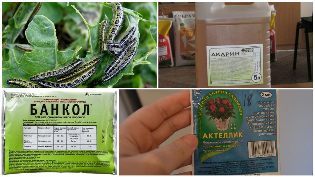 Химические препараты для борьбы с гусеницами