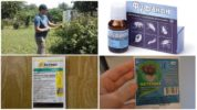 Профессиональные средства от листовертки на смородине