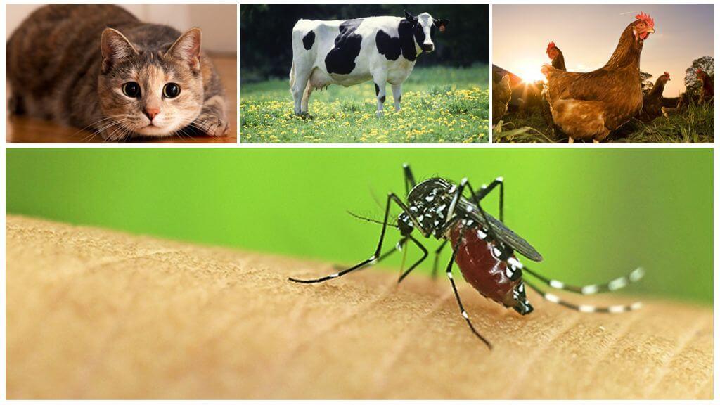 Животные, которых кусают комары