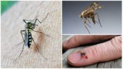 Группа крови и комары