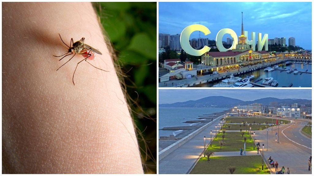 Комары в Сочи