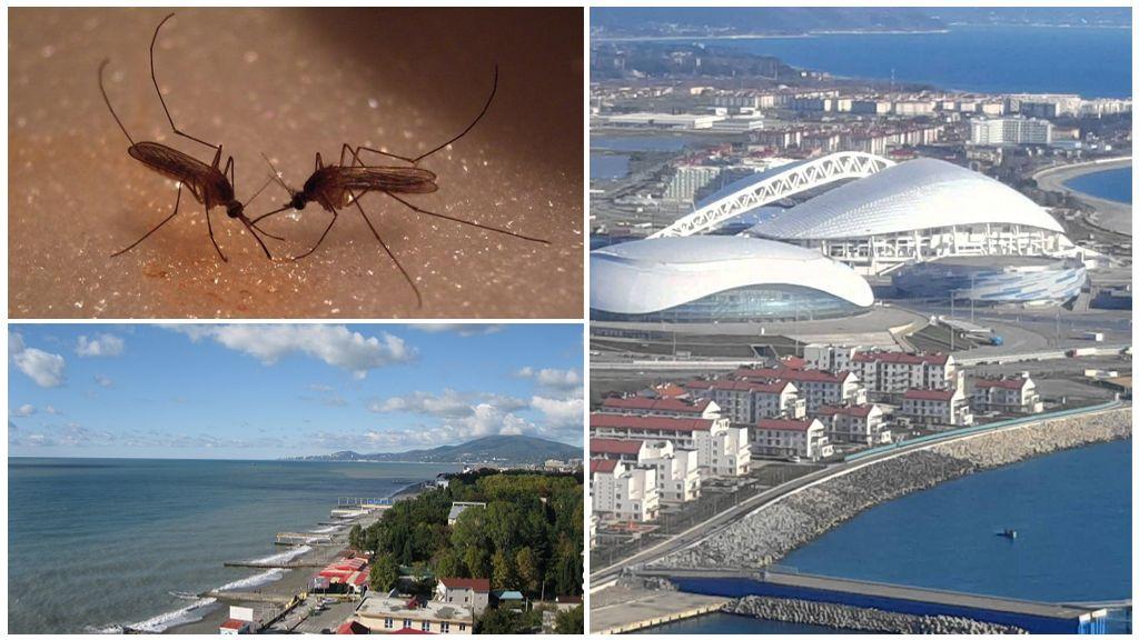 Комары в Краснодарском крае