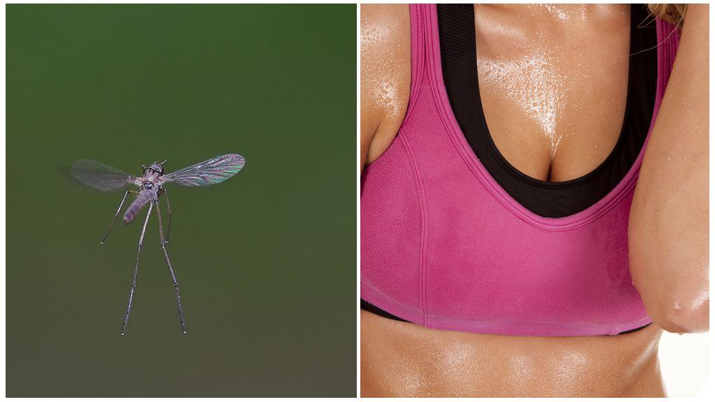 Комары и запах пота