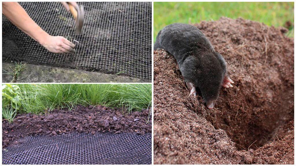 Сетки для борьбы с кротами в огороде