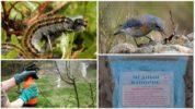 Способы борьбы с гусеницами