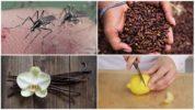 Методы отпугивания насекомых