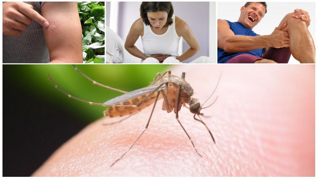 Последствия укуса малярийного комара