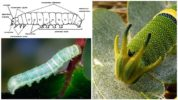 Строение гусеницы