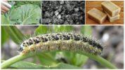 Зола для борьбы с капустницей