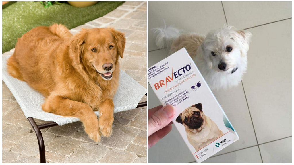 Таблетки от клещей для собак Бравекто