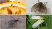 Разновидности мелких насекомых