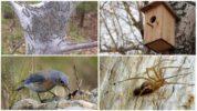 Биологические методы борьбы с гусеницами