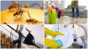 Способы борьбы с мухами дрозофилами