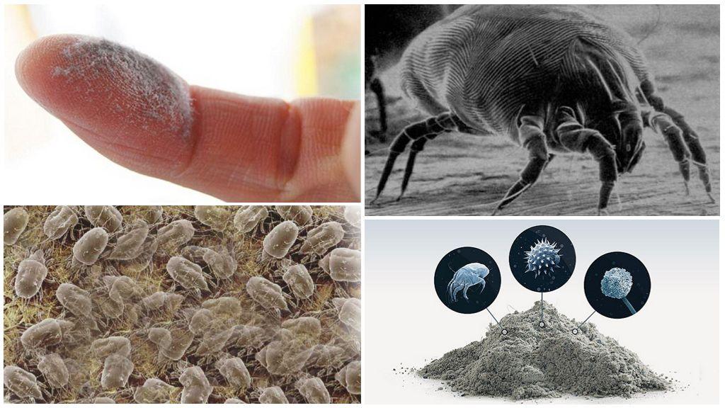 Клещи постельные или пылевые