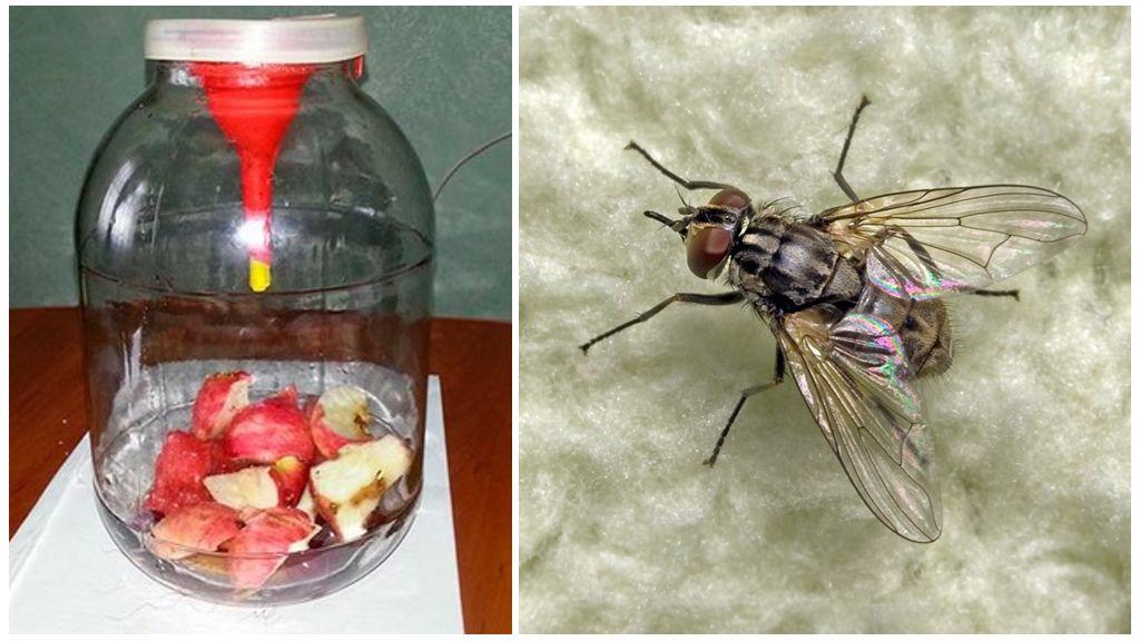 Ловушка для мух из стеклянной банки