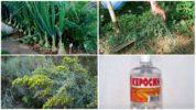 Способы уничтожения морковной мухи