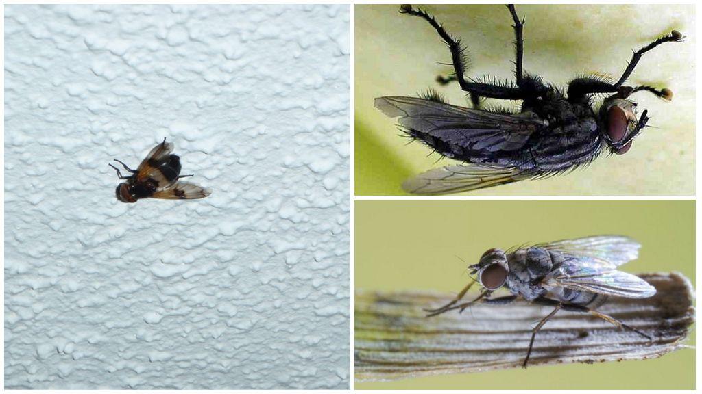 Как муха садится и держится на потолок