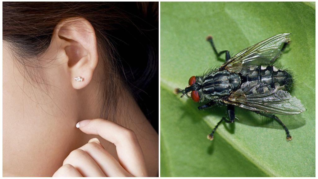 Как вытащить муху из уха в домашних условиях