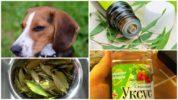 Применение народных средств у собак