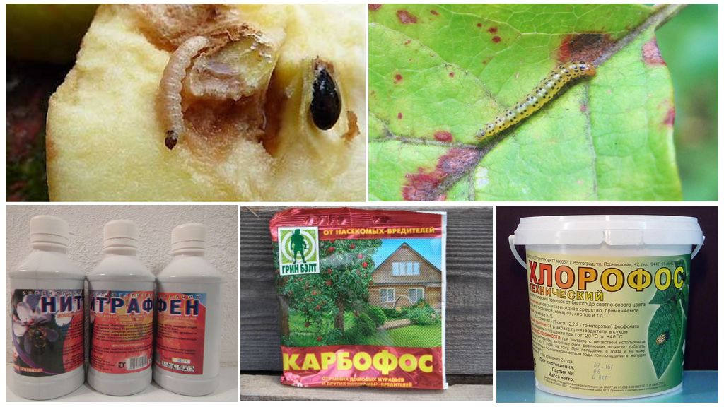 Химические методы уничтожения гусениц