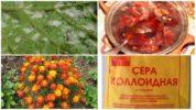 Народные методы борьбы с виноградным клещом