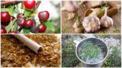 Народные методы борьбы с вишневой мухой
