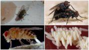 Жизнедеятельность мухи