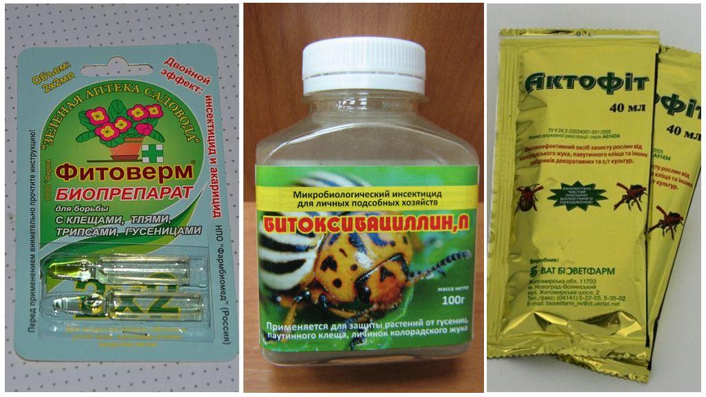 Биопрепараты для борьбы с паутинным клещом