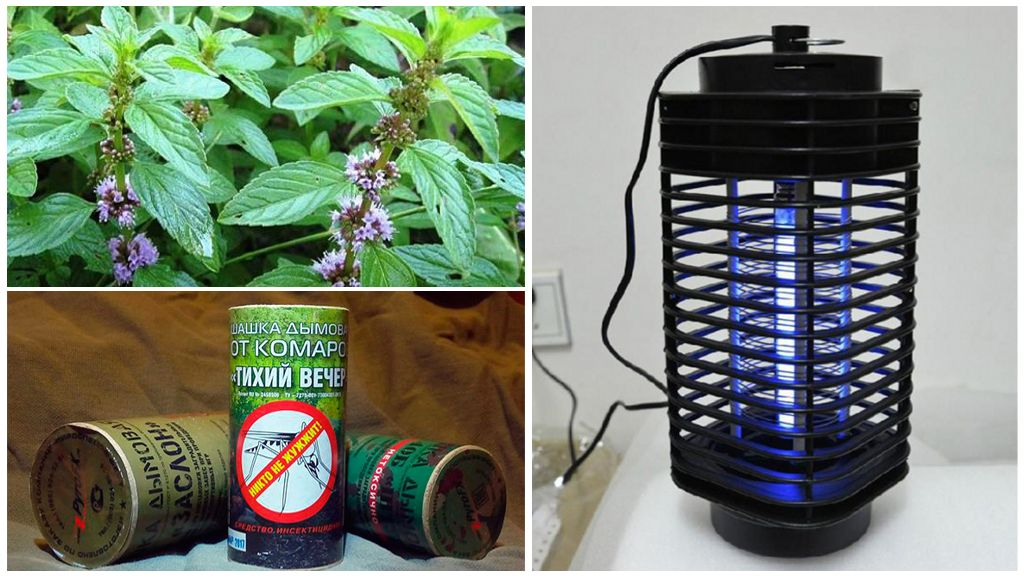 Различные способы борьбы с насекомыми