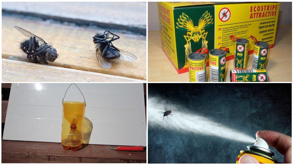 Борьба с мухами в жилом помещении