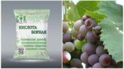 Борная кислота от ос на винограднике
