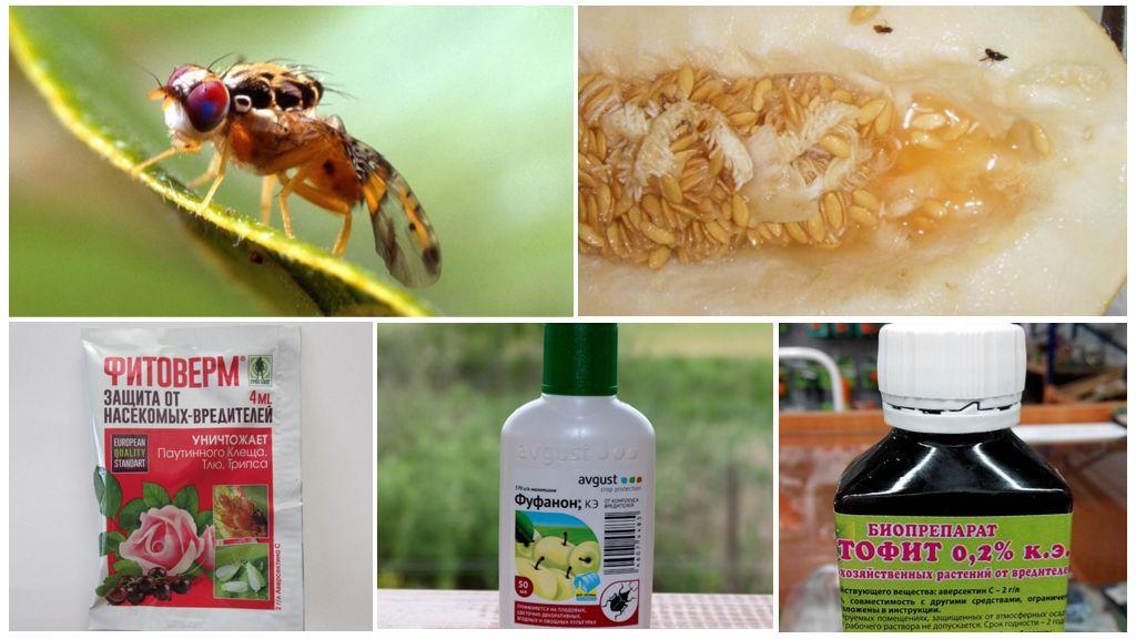 Химические препараты для борьбы с дынной мухой