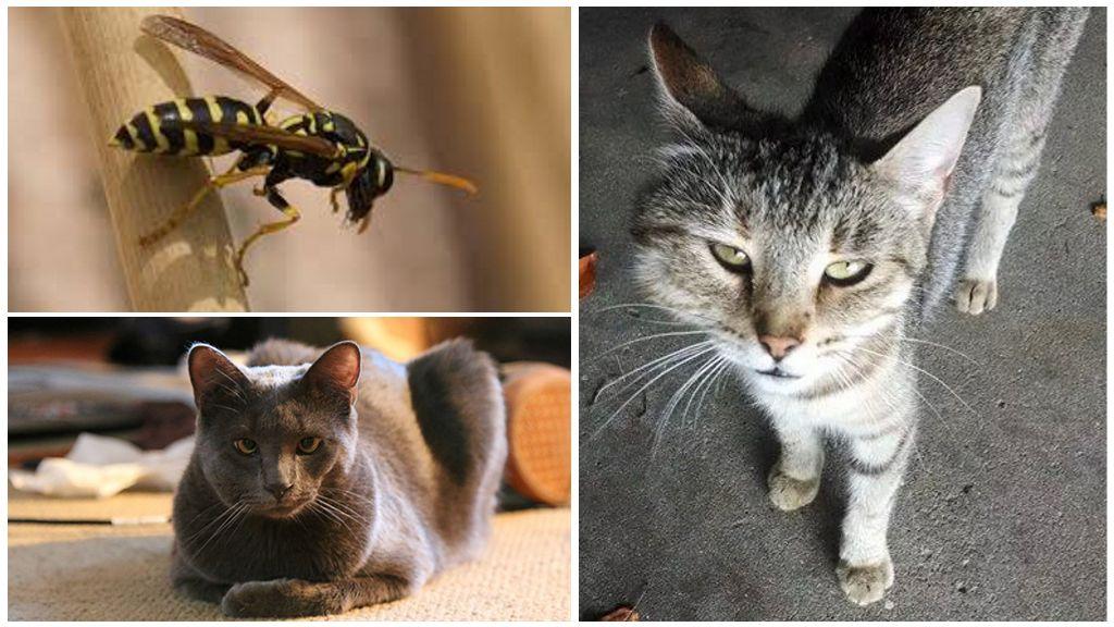 Что делать, если кота или кошку укусила оса