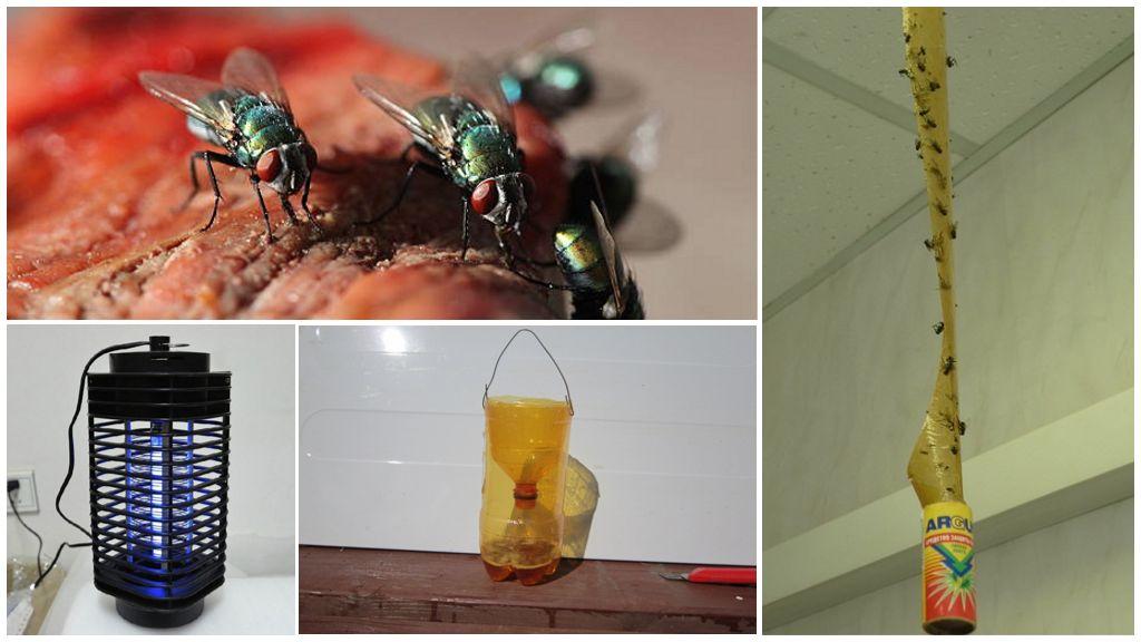 Механические способы борьбы с насекомыми