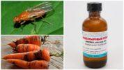 Нашатырный спирт от морковной мухи