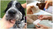 Обработка укуса осы у собаки