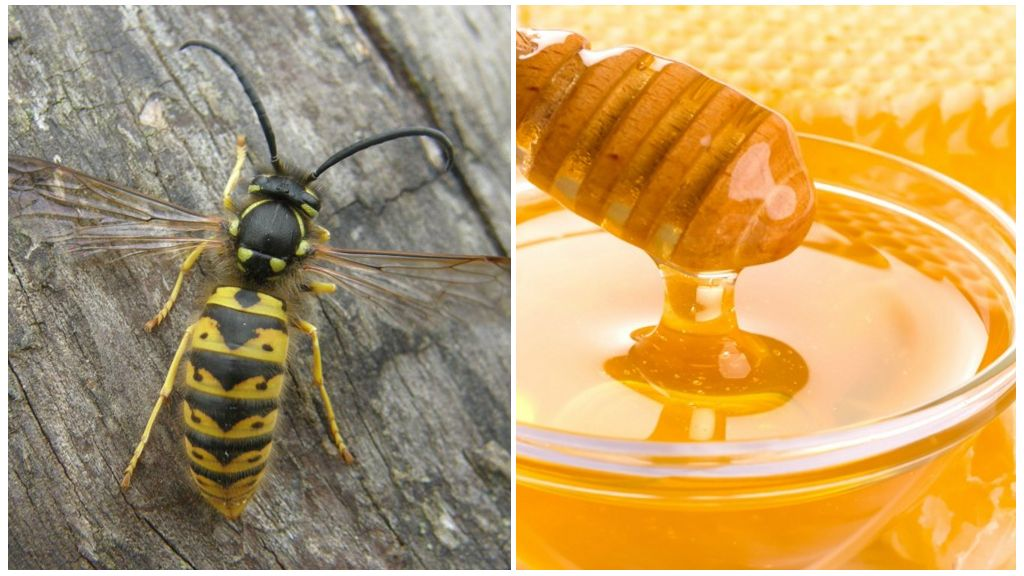 Осы и мед