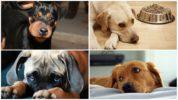 Последствия укуса осы для собаки