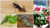 Растения для отпугивания мух в квартире