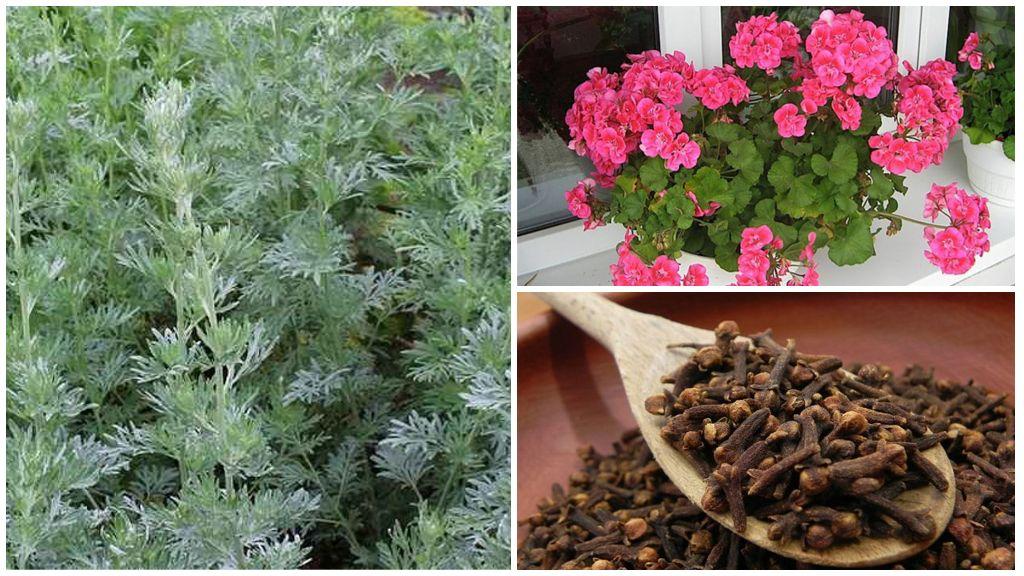 Растения, отпугивающие мух