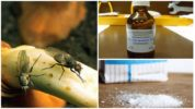 Народные рецепты борьбы с луковой мухой