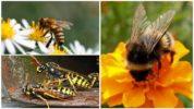 Пчела, шмель и оса
