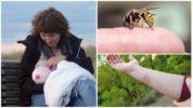 Опасность укуса осы в период лактации